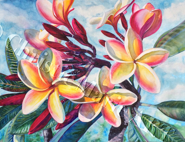 Tropical Plumeria Flowers, Original Large Watercolor Painting Art, Beautiful Hawaiian Koa Wood Frame Artist Christie Marie E. Russell ©