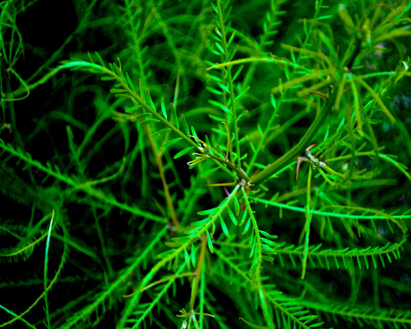 Green Leaves Photography - Hannah Left Wright Art