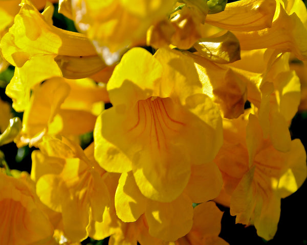 Yellow Flowers Photography - Hannah Left Wright Art