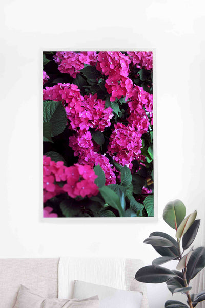 French Hydrangeas Print