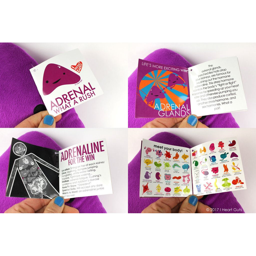 Adrenal Gland Plush Booklet