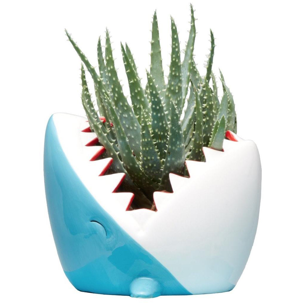 Shark Planter Pot
