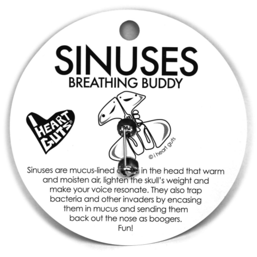 Sinus Lapel Pin back