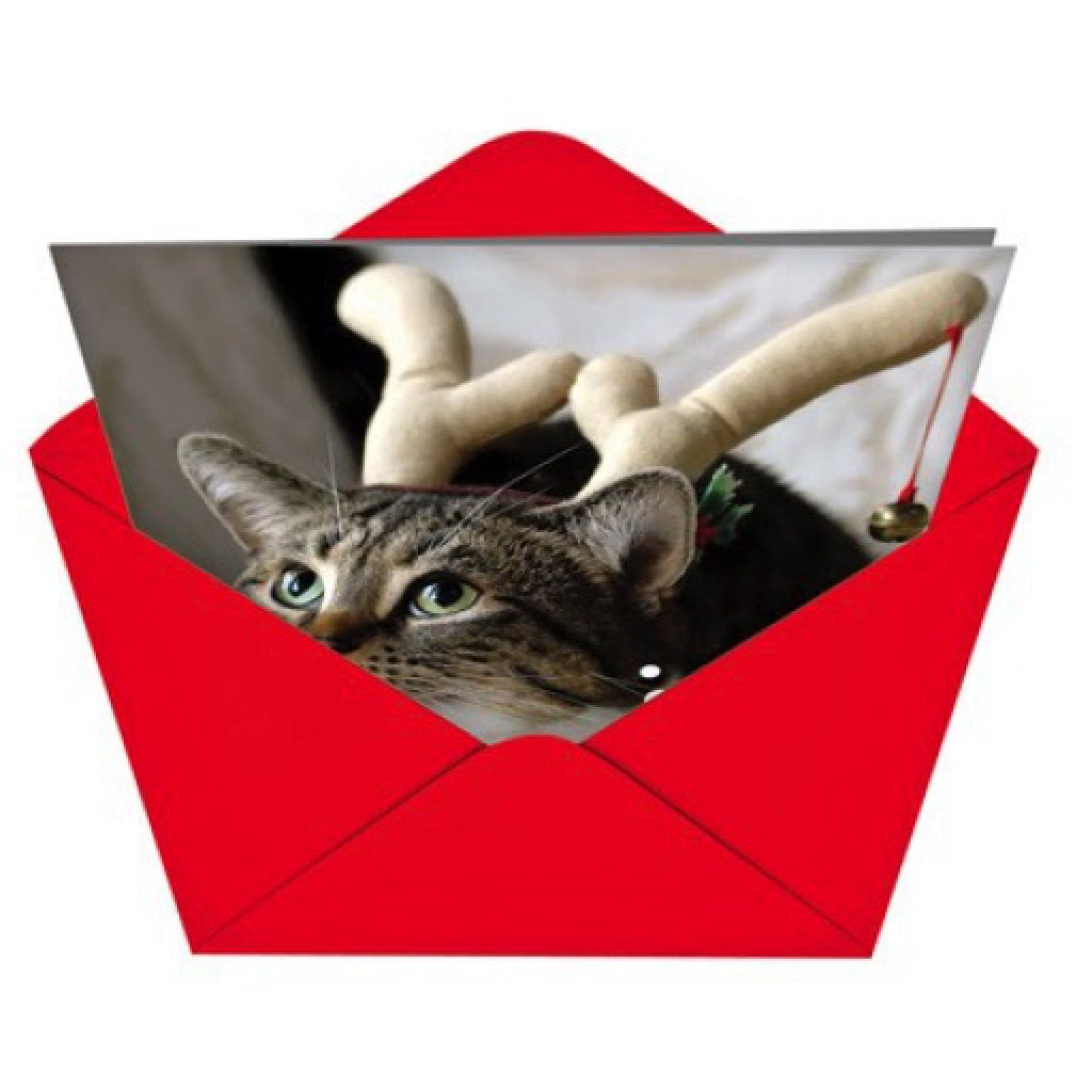 Why Cat Pees On Couch Card envelope
