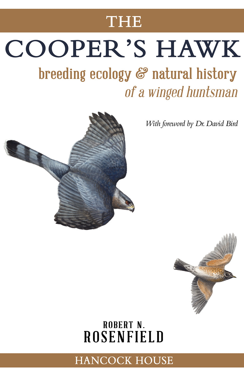 The Cooper's Hawk: breeding ecology & natural history of the winged huntsman