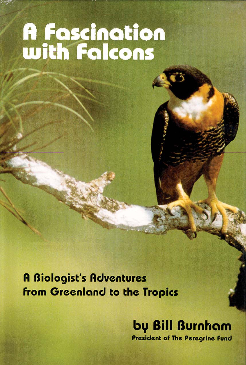 Fascination with Falcons: a biologist's adventures from Greenland to the tropics