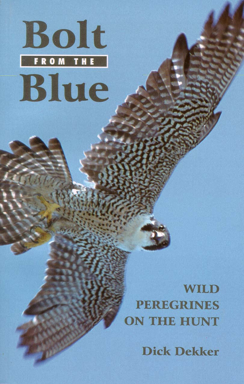 Bolt from the Blue: wild peregrines on the hunt