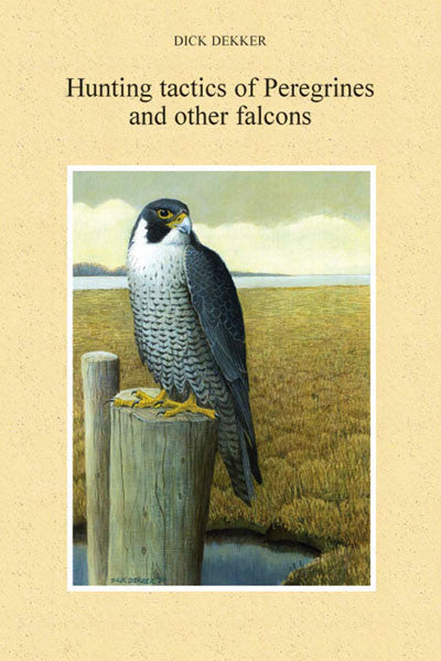 Hunting tactics of Peregrines and other falcons