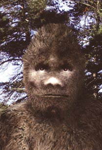 Know the Sasquatch/Bigfoot: sequel and update to meet the sasquatch