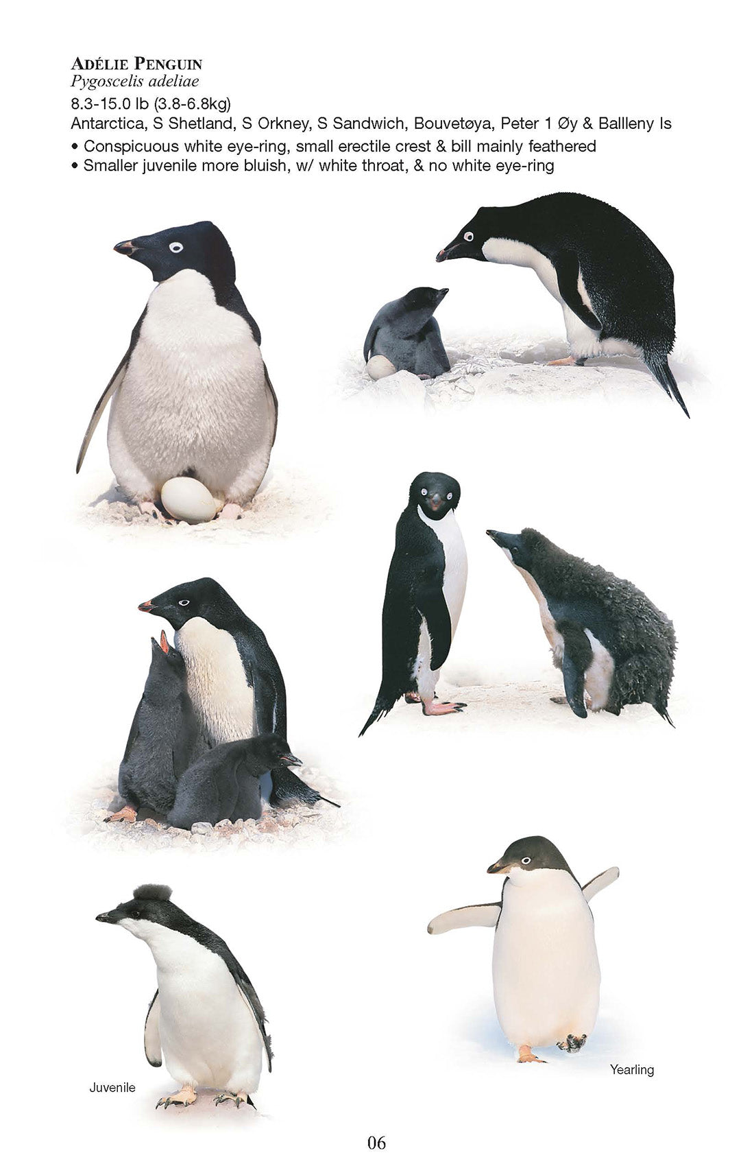 Birds and Mammals of the Antarctic, Subantarctic and Falkland Islands