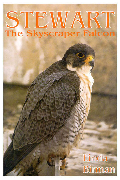 Stewart: the skyscraper falcon