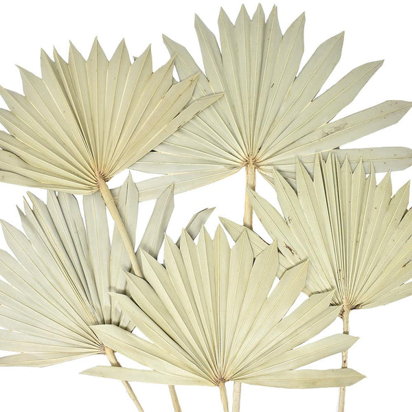 Dried Natural Sun Palm Leaves Bundle, Natural, 5-Piece