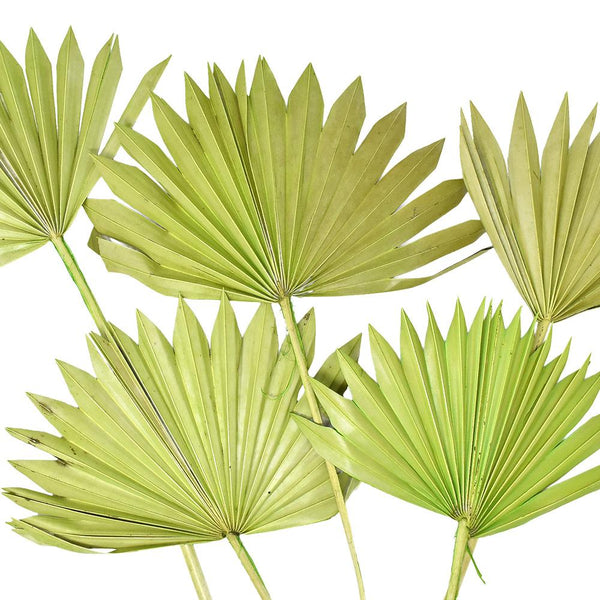 Dried Natural Sun Palm Leaves Bundle, Light Green, 5-Piece