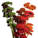 Dried Natural Yarrow Flower Bundle