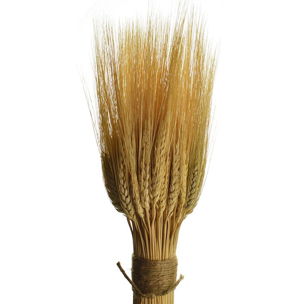 Dried Natural Triticum Wheat Bundle
