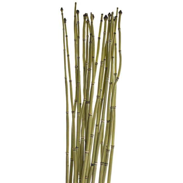 Dried Natural Equisetum Horsetail Bundle