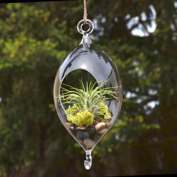 12-Pack, Raindrop Glass Terrarium Air Plant Home Decor, 7-inch w/ Hook