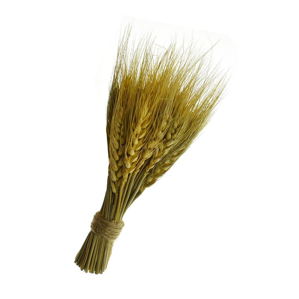 Preserved Wheat Bundle, 8-Inch