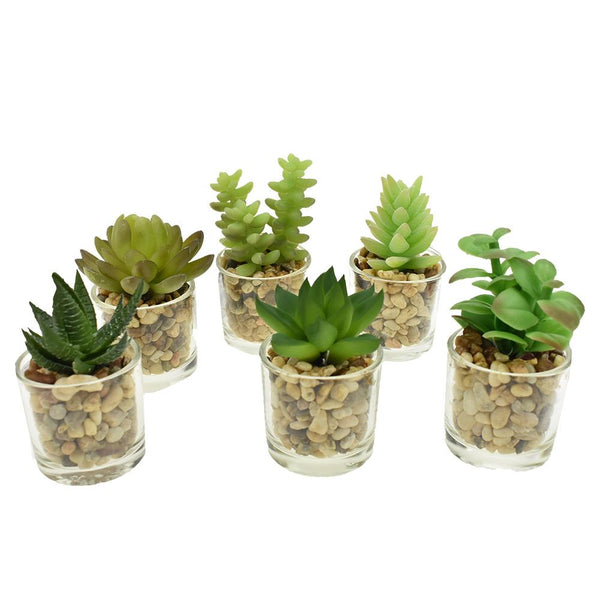 Artificial Assorted Succulents in Glass Planters, 4-1/4-Inch, 6-Piece