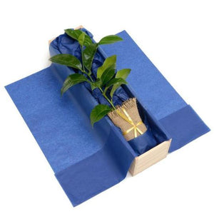 Tree Gifts NZ Singles General Tree Gifts NZ Lemon