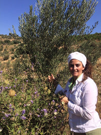 Wild Lavender in the Hiç Olive Forest