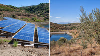 Sustainable Farming at the Hiç Olive Forest