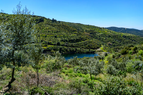 Hiç olive oil forest, beautiful, organic, green trees, blue water