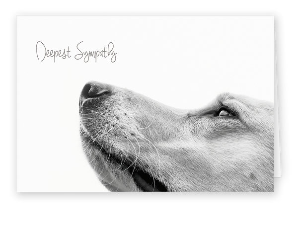 Sympathy Cards for Pets - Up Close Series