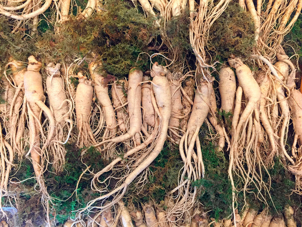 7 Unusual Science-Backed Benefits of American Ginseng (Works Fast)