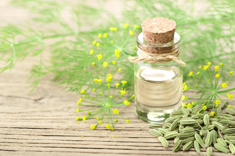 fennel-seed-extract
