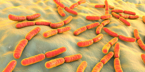 microscopic view of gut flora