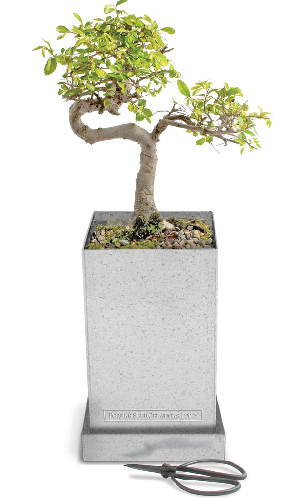 Bonsai Box DIY Kit Clearance