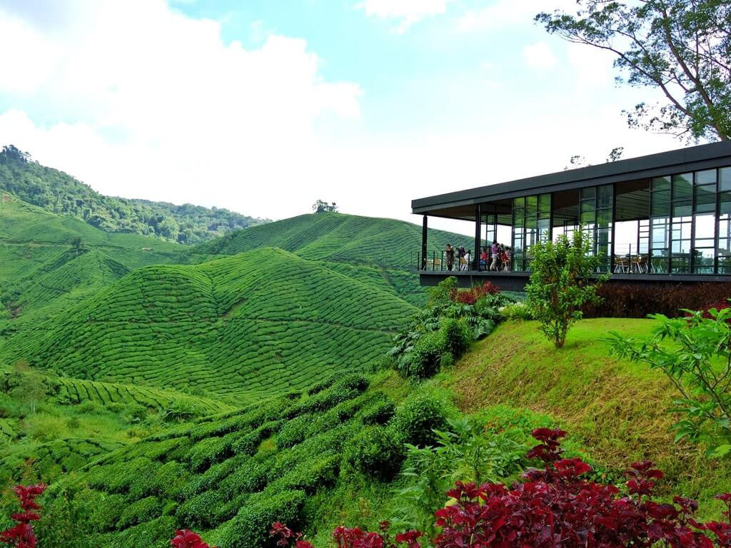 Beautiful view from the Boh Tea Plantation