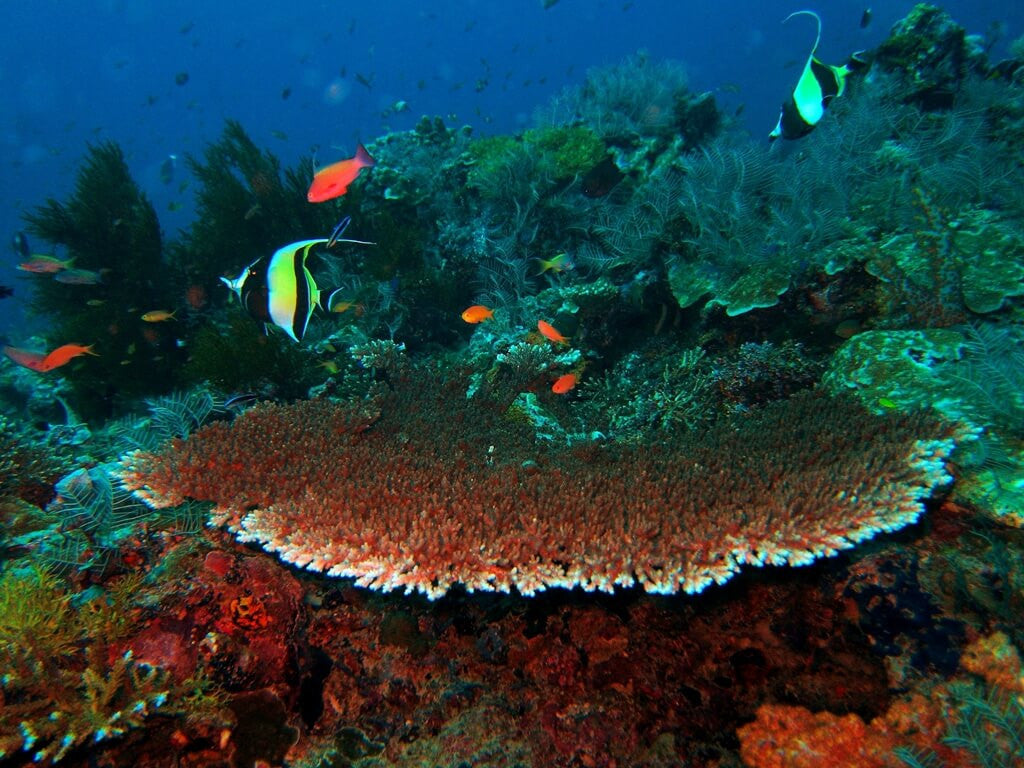 Vibrant underwater world at Pulau Redang Marine Park