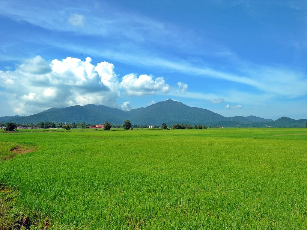 Green fields near Gunung Raya