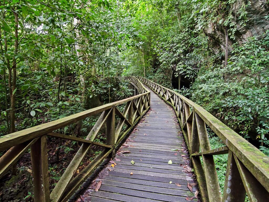Wooden boardwalk into the jungle