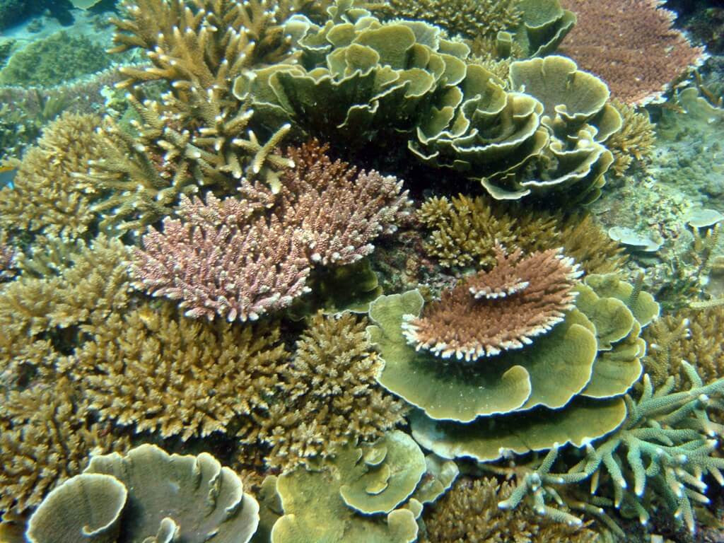 Gorgeous coral reef