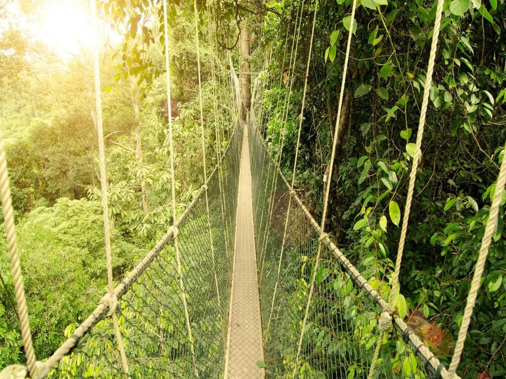 High above the canopies on a canopy walkway