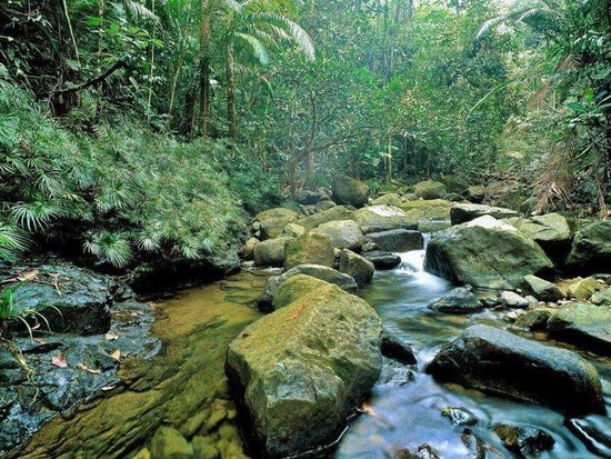 A stream inside the jungle of Endau Rompin National Park
