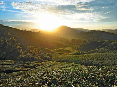 Beautiful sunrise view on Cameron Highlands