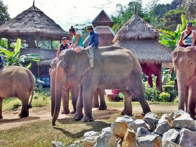 elephant riding at village Luang Prabang