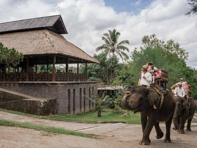 Elephant riding in Bali