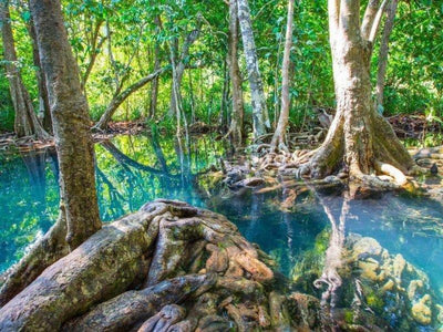 Emerald pool in the jungle of Koh Klang