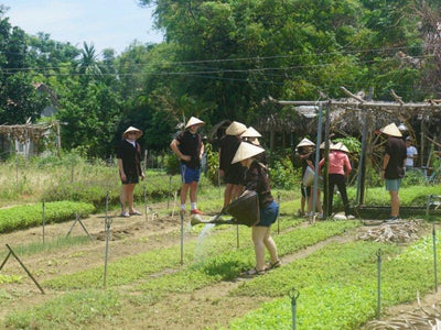 Farming Experience at Tra Que village