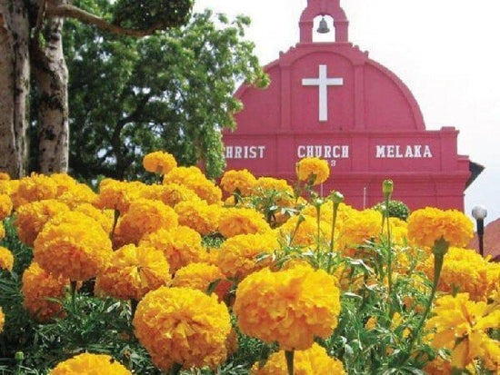 Flower bushes in front of the Christ Church in Malacca