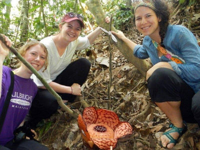 Foreign tourists spotted blooming Rafflesia in the forest of Lata Jarum