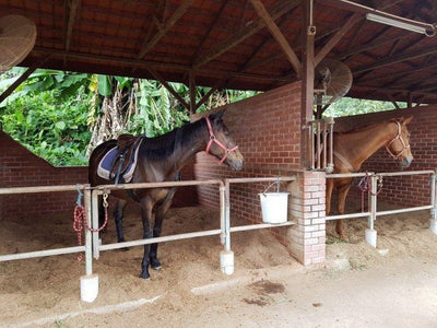 Horse locked in the stable at BUkit Tinggi