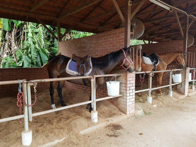 Horses for horse riding kept in stables at Bukit Tinggi