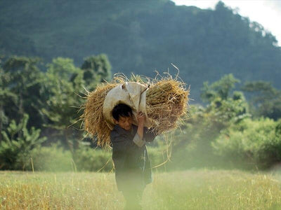 Local villagers carrying a stack of hay