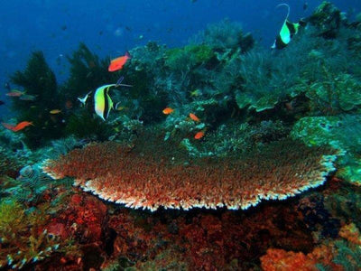 Marine life and corals in Perhentian